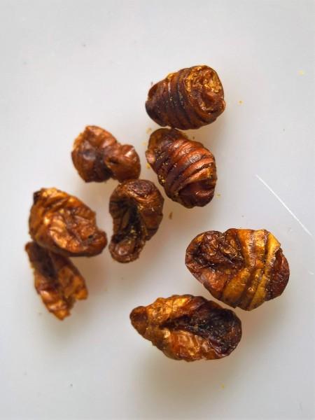 Seidenspinnerpuppen