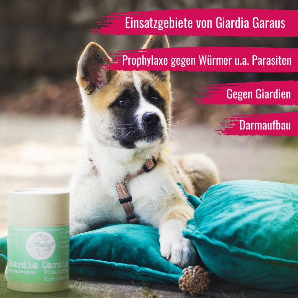 Giardia Garaus - Pulver