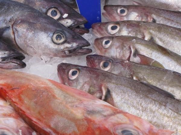 Ganze Makrelen (mit Schwanz und Kopf)